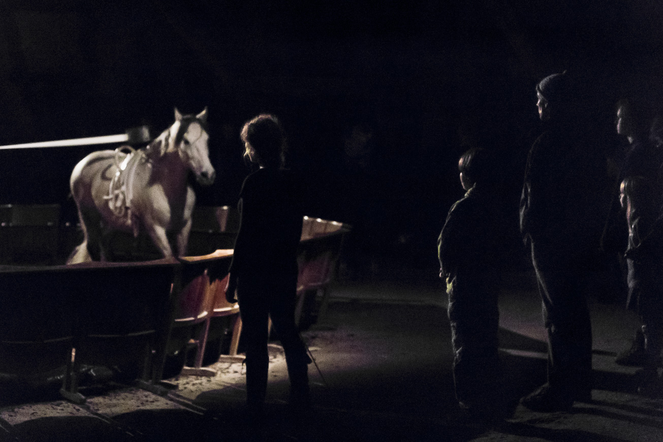 Performance Sequence of a horse in motion